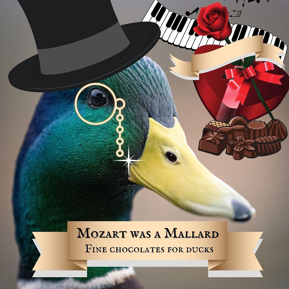 """Sir Mallard, a mallard, wears a top hat and monocle. A heart-shaped box of """"Mozart Was A Mallard: Fine Chocolates for Ducks"""" sits behind him. This is an advert. In the background: A piano keyboard."""