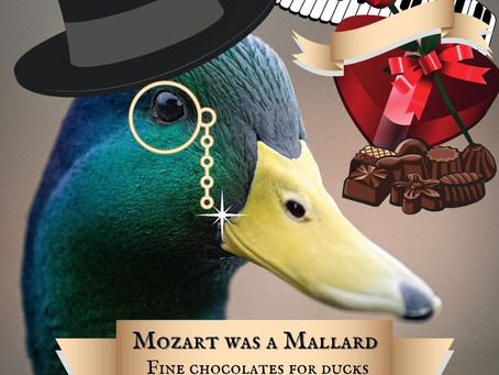 Why Do Ducks Apply To Oxford If They're Not Allowed In? An Interview With Sir Mallard Jones.