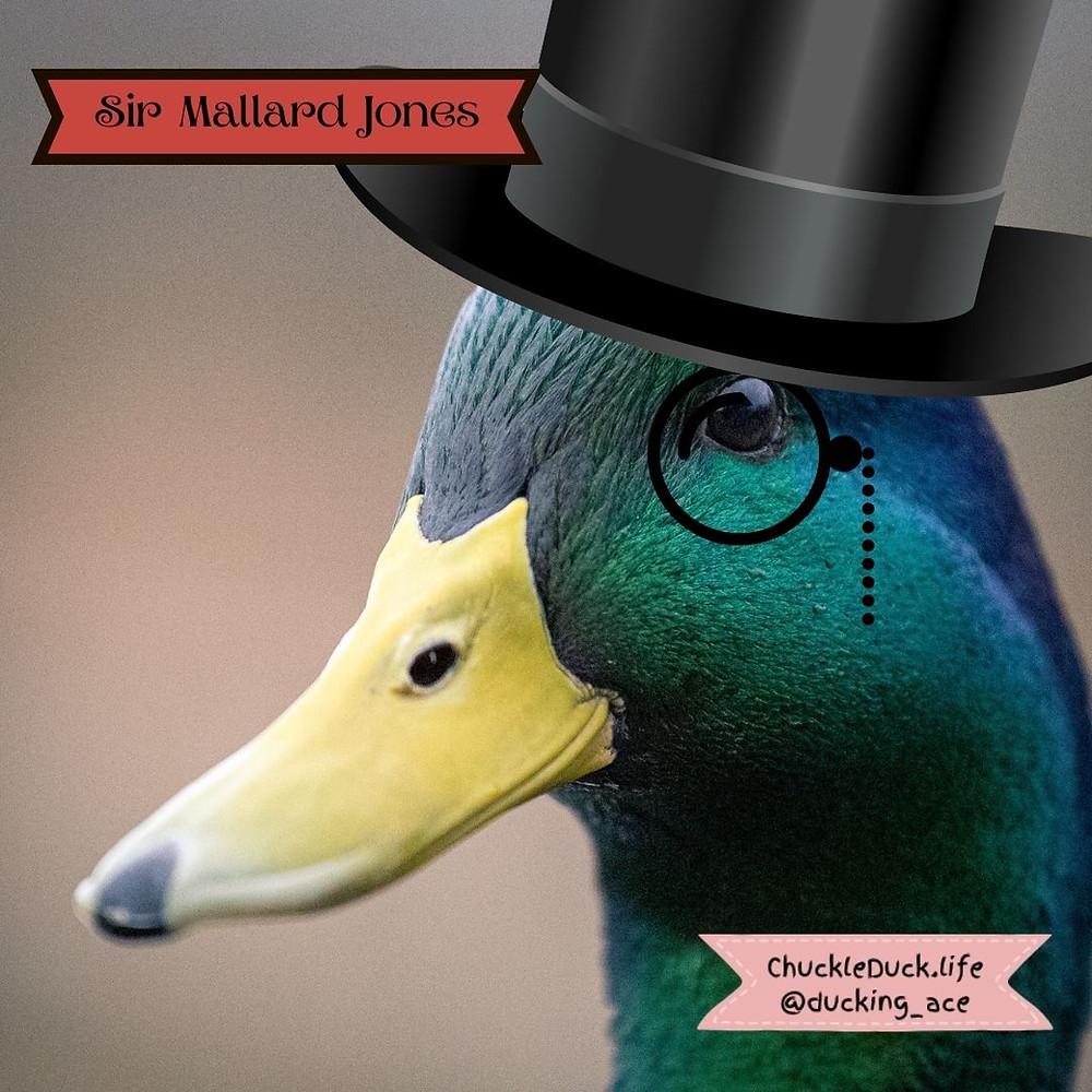 Sir Mallard Jones, a mallard, wears his signature monocle and top hat.