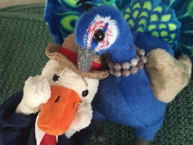 Anxious Duck is being comforted by his partner Peacock Riley