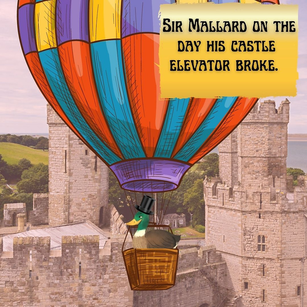 """Sir Mallard Jones, a mallard duck, is floating in a hot air balloon, right near his castle. The caption says, """"Sir Mallard on the day his castle elevator broke."""" By the way, he's also wearing a top hat."""