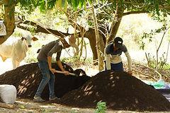 Agriculture bio Cambodge