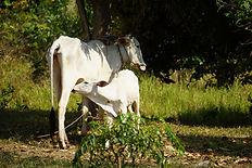 agriculture naturelle Kampot