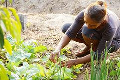 Organic farming Kampot