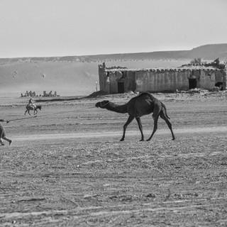 Morocco's Desert Worker