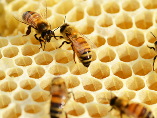 MEDIA RELEASE - World Bee Day: Time for another sweetener but not just a sugar hit