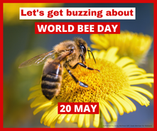 MEDIA RELEASE - World Bee Day Buzz: Time for a real recovery plan, not just a sugar hit