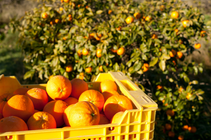 MEDIA RELEASE - Web site crashes: Problems plague Government's online agriculture worker permit