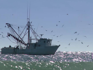 MEDIA RELEASE: Seven Months Late - NSW Government must release report into Commercial Fisheries