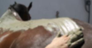 6-application-argile-marine-cheval.png