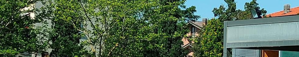 ASPETTANDO LE CICALE - Quella Piccola Casa nel Bosco - Storie di Lupi, di Cappuccetti e di Nonne