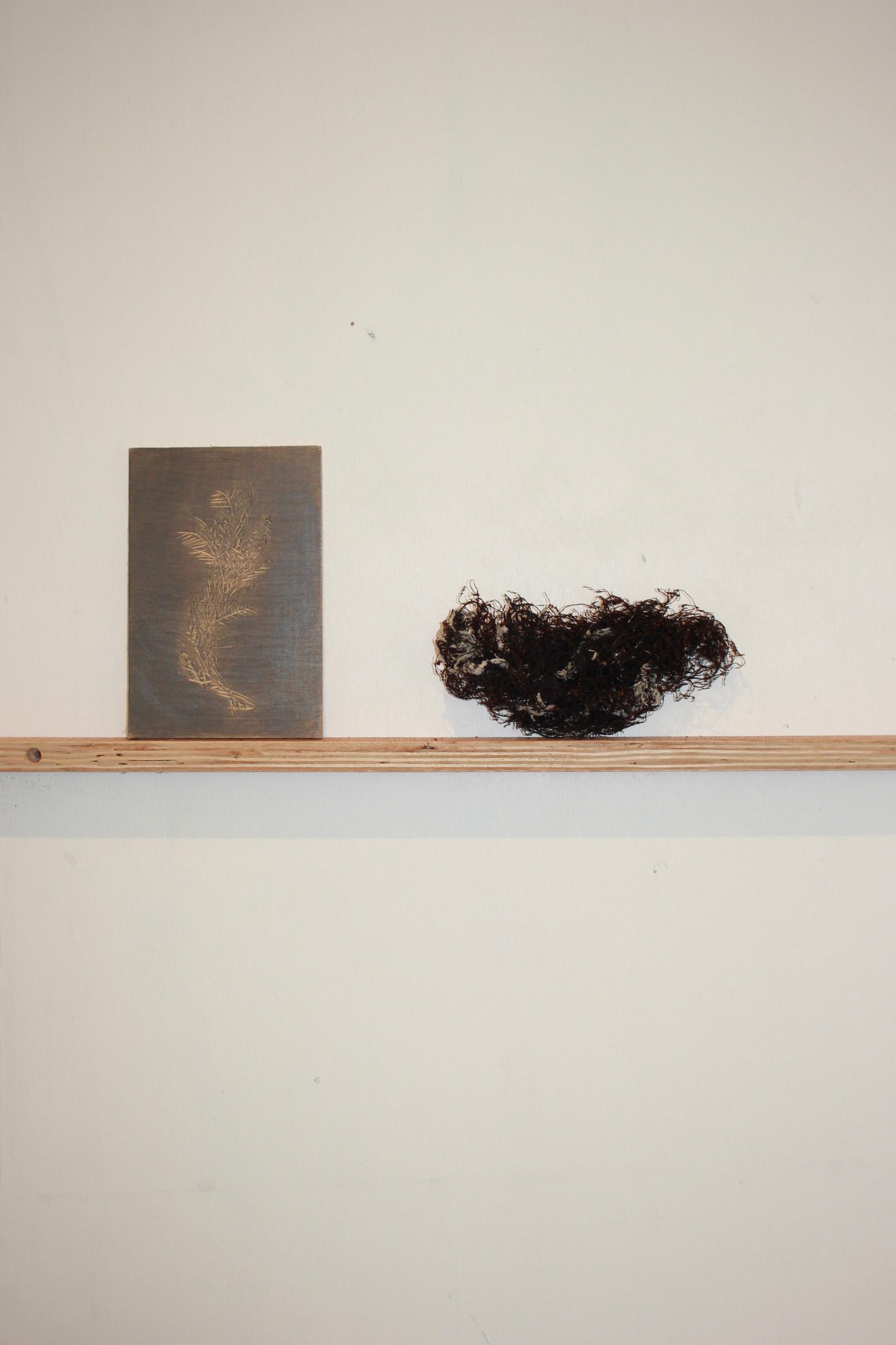graphite on woodblock seaweed