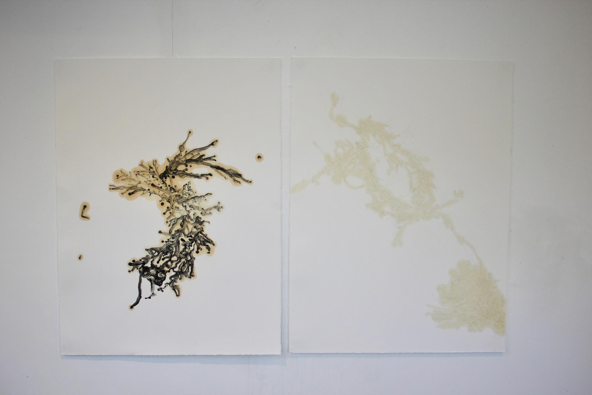 oil on somerset black : white 50 x 70 cm each