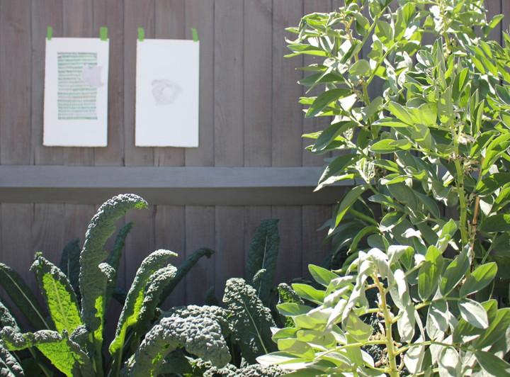 botanicals : installation view