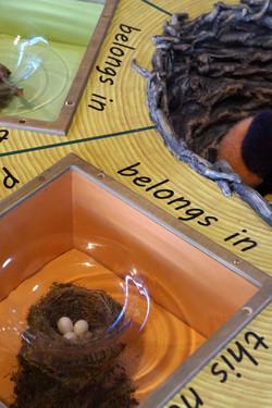 Nest and Egg detail