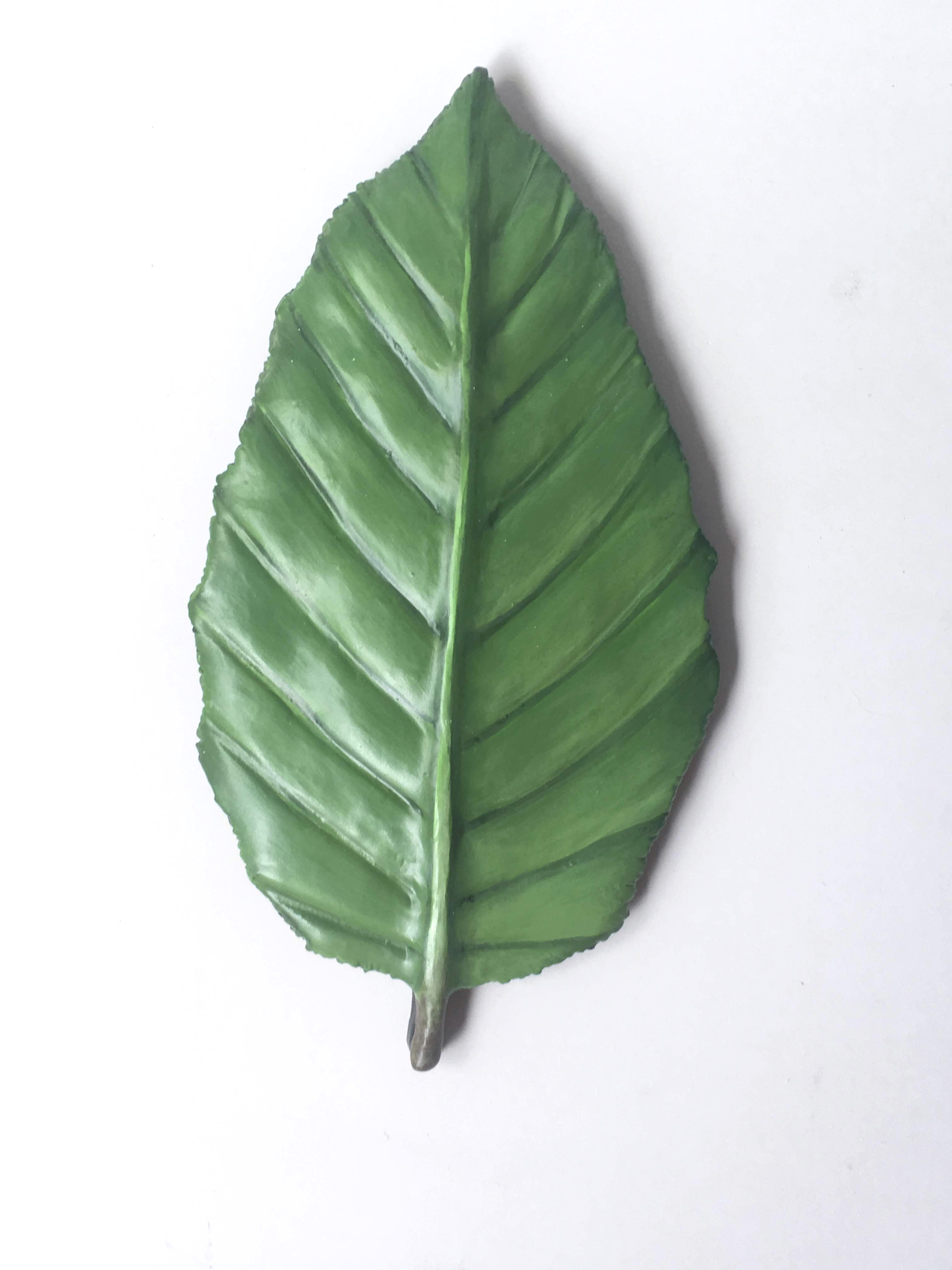 Hornbeam Leaf