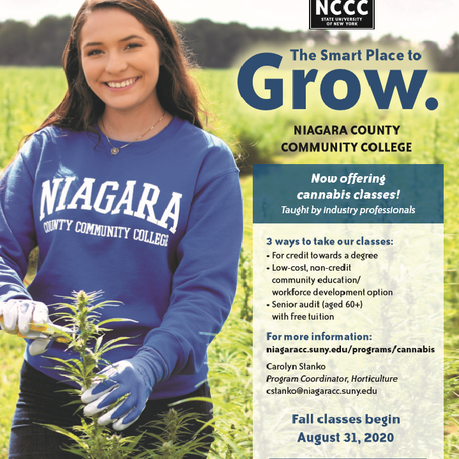 Niagara County Community College Offers Cannabis Courses