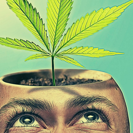 Cannabidiol is Psychoactive, so why does everyone say that it's not?