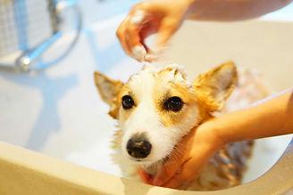 bathing_sl.jpg