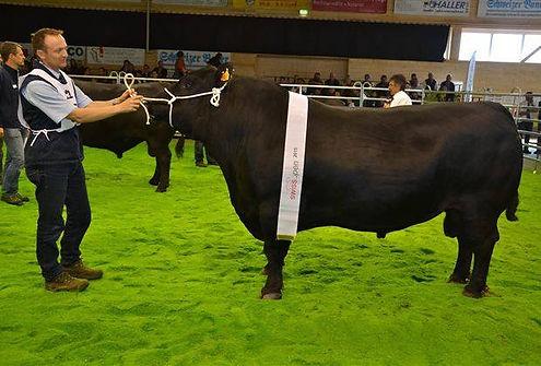 SwissOpen-Sieger 2015 Kategorie Stiere Angus