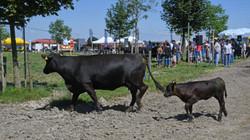 Rindfleisch bestellen Schweiz