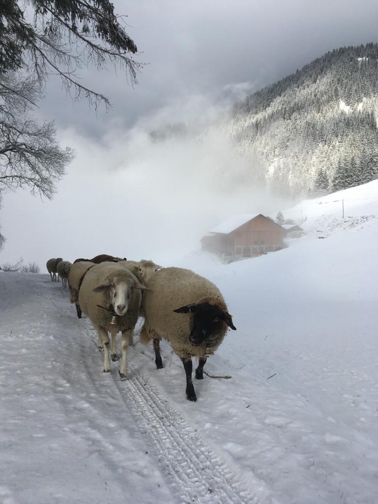 BiohofStuls_Winterspaziergang.jpg