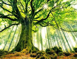 soin énergétique - guérison spirituelle - chakras