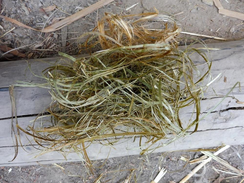 Krátká vlákna vyloupaná ze stonků kopřivy. Foto V. Mikešová