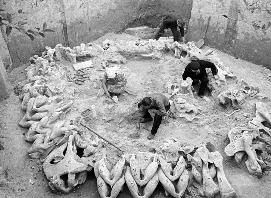 Výzkum obydlí z mamutích kostí na lokalitě Mežiřič