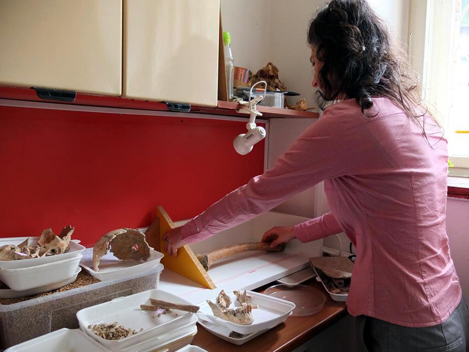 Antropoložka Petra Beran-Cimbůrková při měření stehenní kosti. Foto archiv ÚAPPSČ