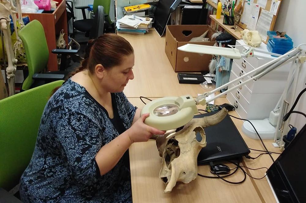 Osteologická analýza. Foto archiv M. Nývltové Fišákové
