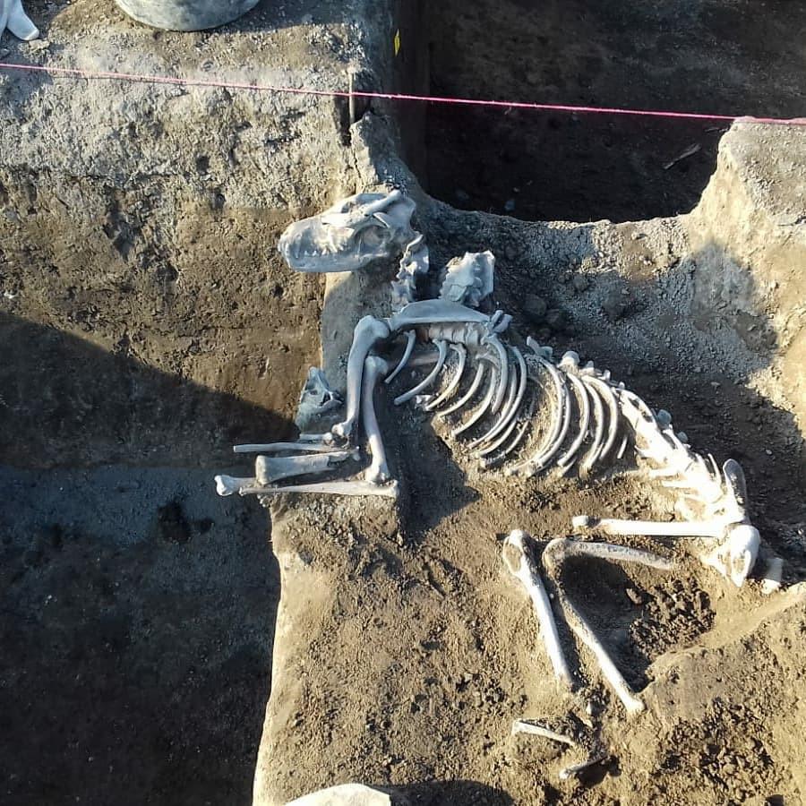 Hrob psa z doby římské z Klecan. Foto L. Mattiello