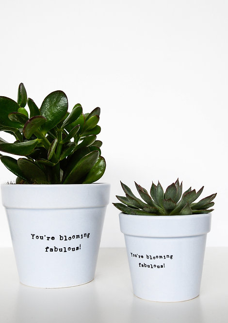3 'You're Blooming Fabulous' Cacti Planters