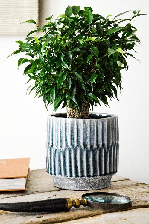 Onno Planter