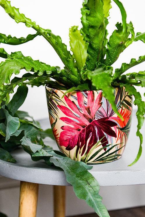 Monza Tropical Fuchsia Planter