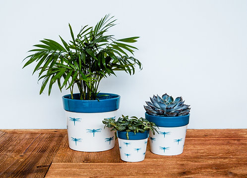 3 Dragonfly Cacti Planters