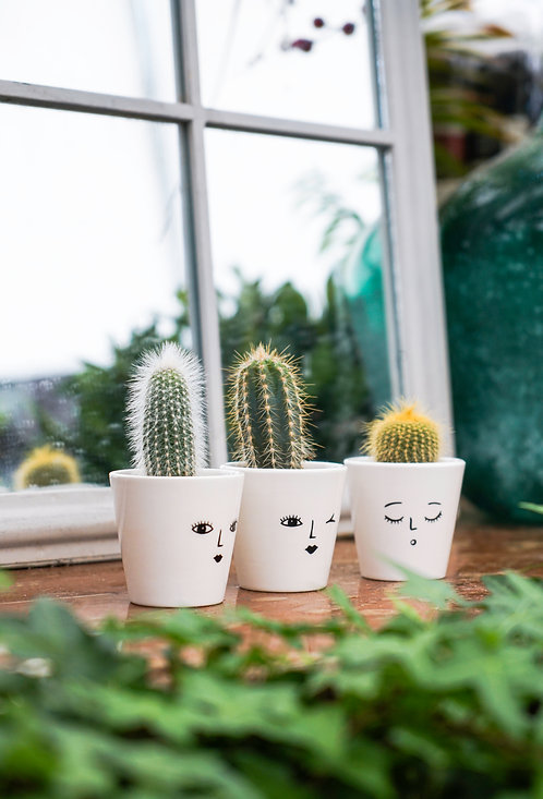 3 Cheeky Face Planters