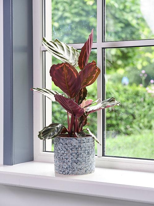 Terni Plant Pot