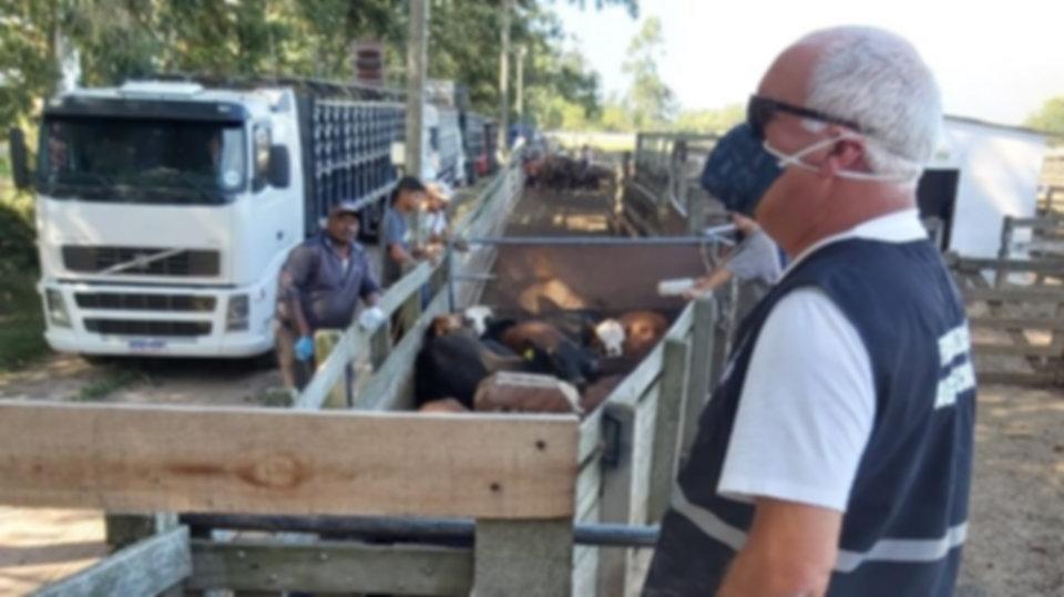 Técnicos da Secretaria acompanham o embarque de 22 mil animais para a Jordânia
