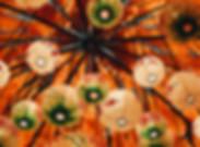 alphacolor-13-159339.jpg