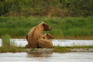 bears (1).jpg