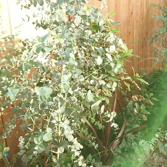 テラス植栽
