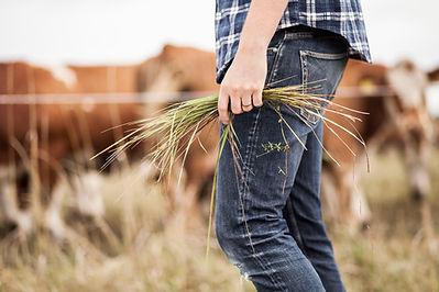 Un agriculteur avec des vaches en arrière-plan