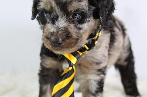 Puppy Dog