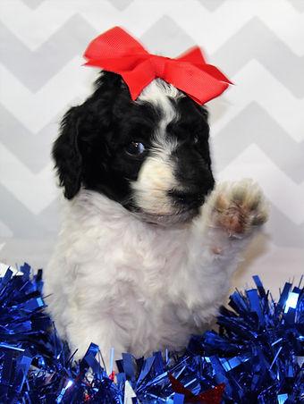 Hi! Puppy