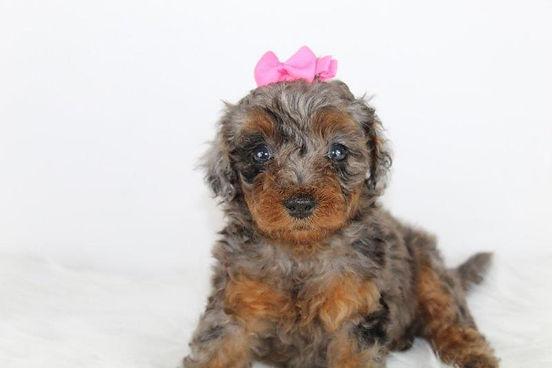Cute Ribbon Puppy