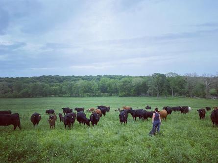 CattlemanU & Wieczorek Farms joint together!