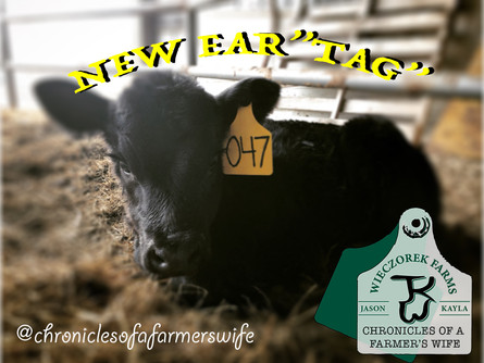 Tagging Calves Vlog #10 from 2.10.2020