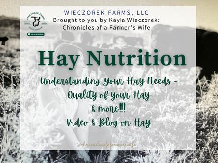 Understanding Your Hay Needs Better | Hay Nutrition Vlog
