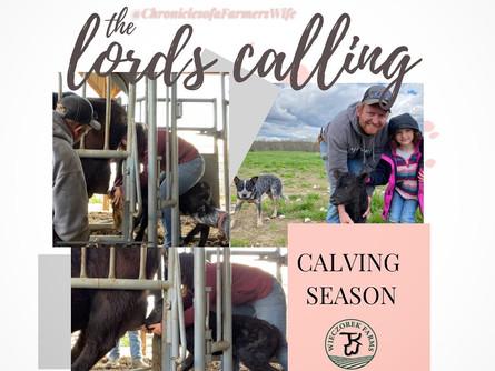 Tending the Herd -